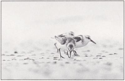 En holländsk polder. Bild 4