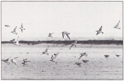En holländsk polder. Bild 5